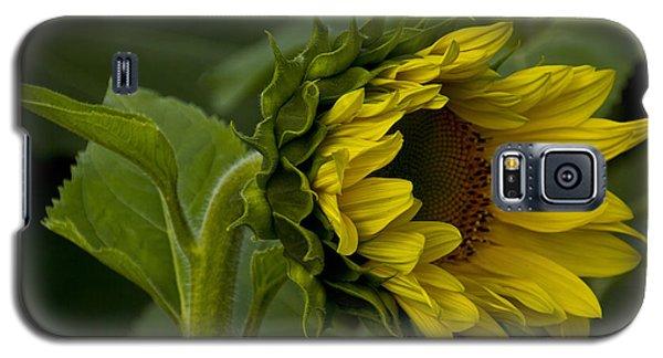 Mostly Open Sunflower Galaxy S5 Case by Bill Woodstock
