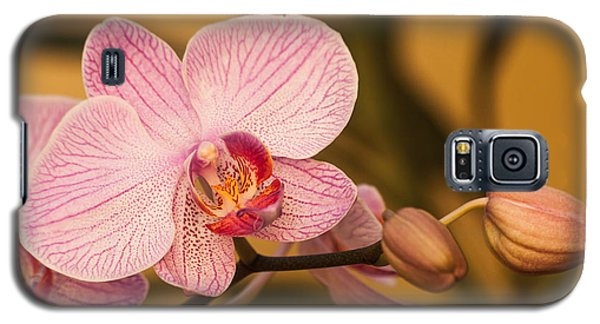 Moth Orchid Galaxy S5 Case by Ed Gleichman
