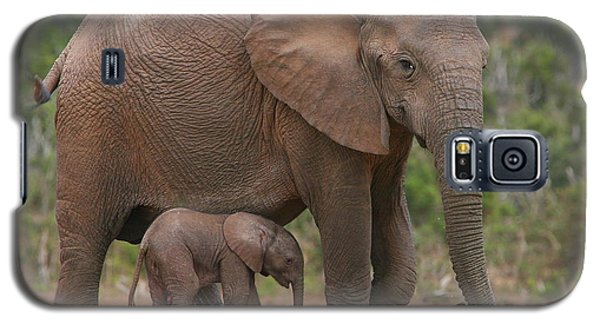 Elephant Galaxy S5 Case - Mother And Calf by Bruce J Robinson
