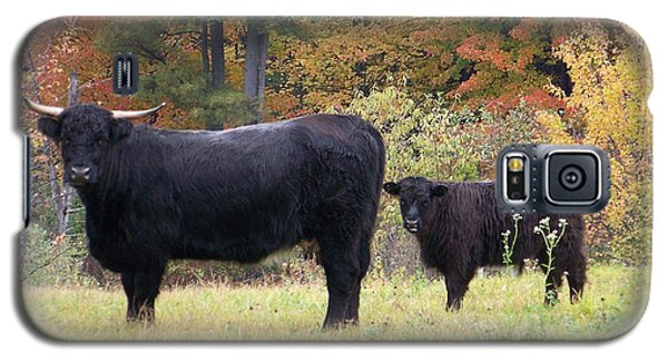 Galaxy S5 Case featuring the photograph Highland Cattle  by Eunice Miller