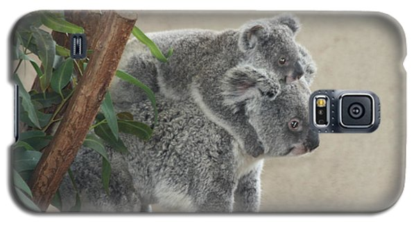 Mother And Child Koalas Galaxy S5 Case by John Telfer