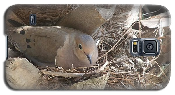 Galaxy S5 Case featuring the photograph Mother Dove  by Deborah DeLaBarre