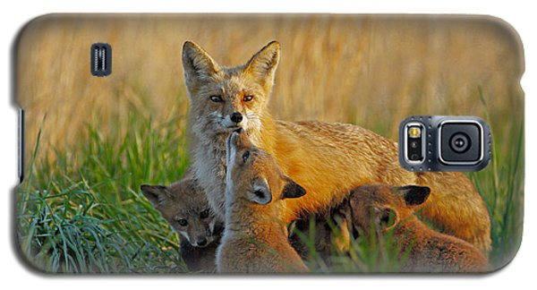 Mother Fox And Kits Galaxy S5 Case