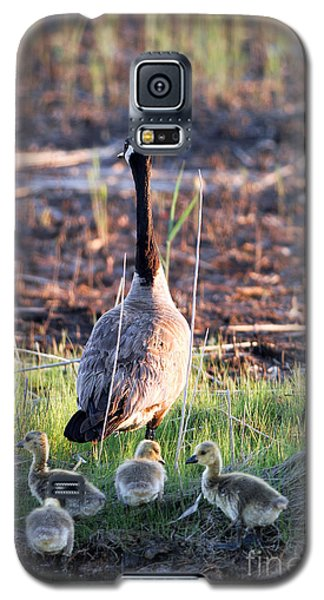 Mother Goose And Goslings Galaxy S5 Case