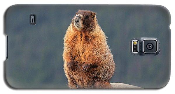 Mother Marmot Galaxy S5 Case