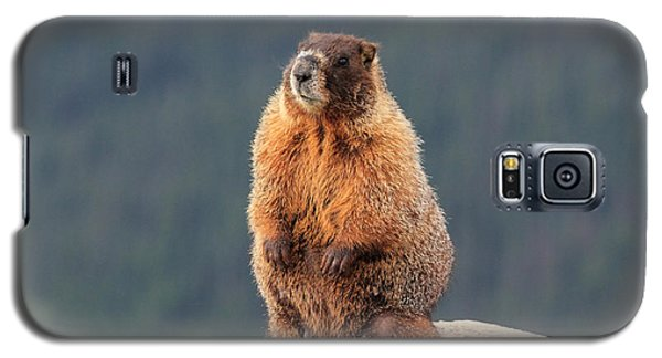 Mother Marmot Galaxy S5 Case