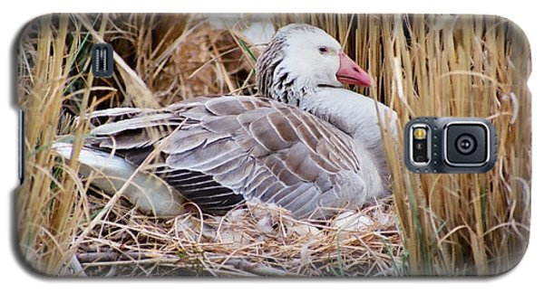 Galaxy S5 Case featuring the photograph Mother's Day Goose by Anita Oakley