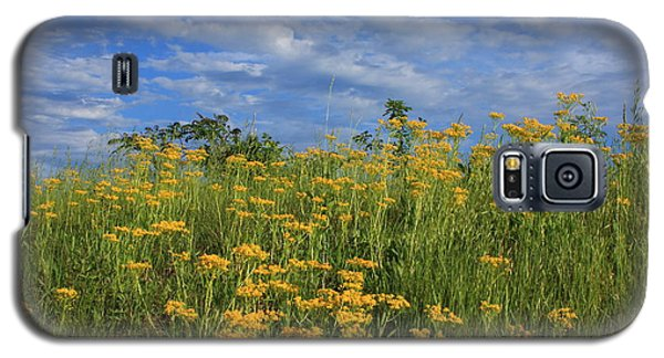 Galaxy S5 Case featuring the photograph Mount Cheaha Goldenrod-alabama by Mountains to the Sea Photo