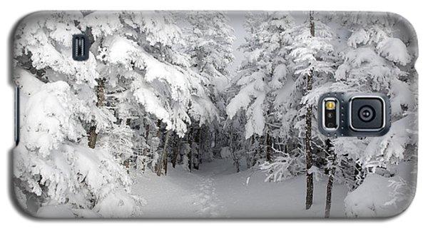 Mount Osceola Trail - White Mountains New Hampshire Galaxy S5 Case