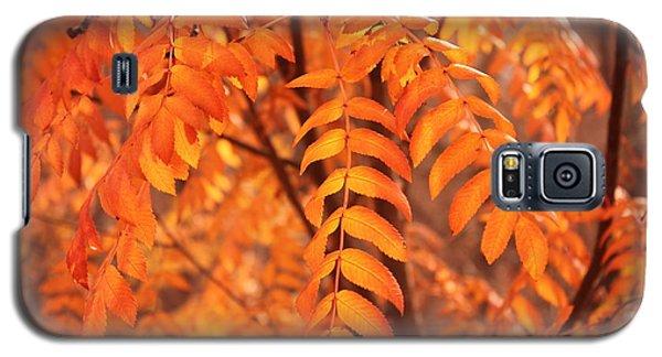 Mountain Ash Leaves - Autumn Galaxy S5 Case by Jim Sauchyn