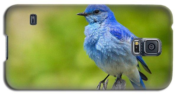 Mountain Bluebird Galaxy S5 Case by Aaron Whittemore