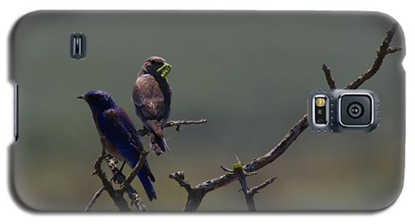 Mountain Bluebird Pair Galaxy S5 Case by Mike  Dawson