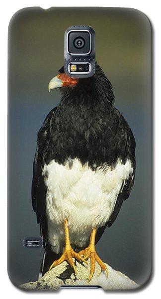 Mountain Caracara Galaxy S5 Case