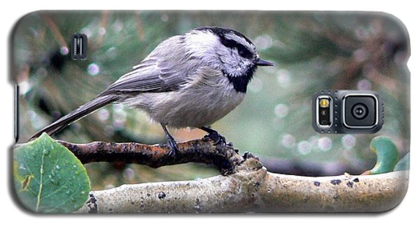 Mountain Chickadee On A Rainy Day Galaxy S5 Case by Marilyn Burton