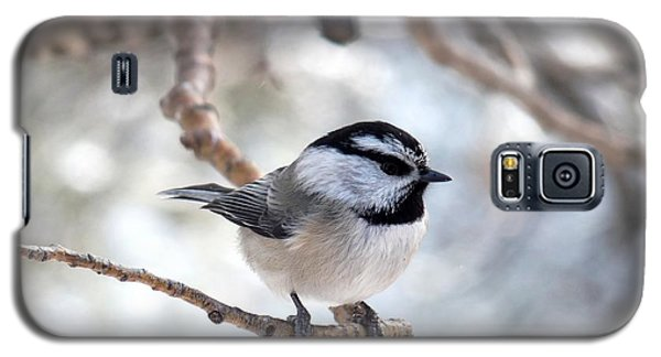 Mountain Chickadee On Branch Galaxy S5 Case by Marilyn Burton