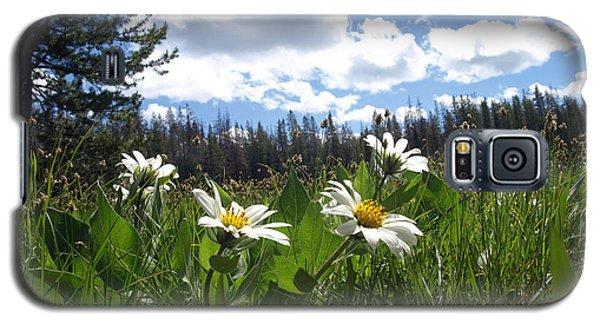 Mountain Daisies Galaxy S5 Case