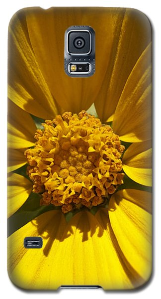 Mountain Daisy Galaxy S5 Case by Jeff Goulden