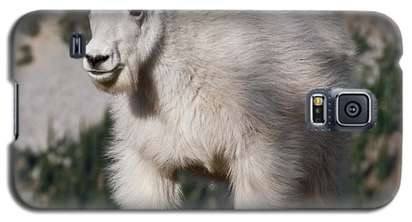 Mountain Goat Kid Standing On A Boulder Galaxy S5 Case