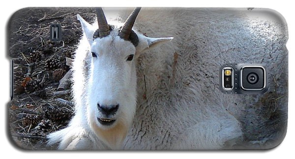 Galaxy S5 Case featuring the photograph Mountain Goat by Linda Cox