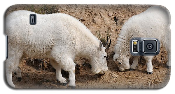 Galaxy S5 Case featuring the photograph Mountain Goats At The Salt Lick by Vivian Christopher