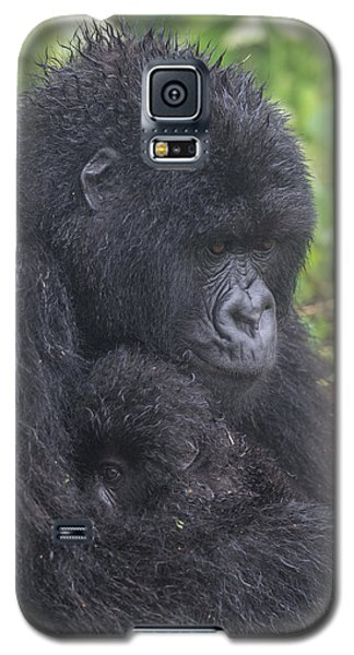 Gorilla Galaxy S5 Case - Mountain Gorilla, Gorilla Beringei by Tom Murphy