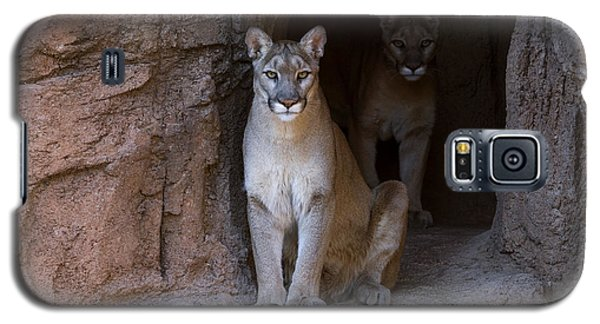 Galaxy S5 Case featuring the photograph Mountain Lion 1 by Arterra Picture Library
