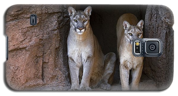 Galaxy S5 Case featuring the photograph Mountain Lion 2 by Arterra Picture Library