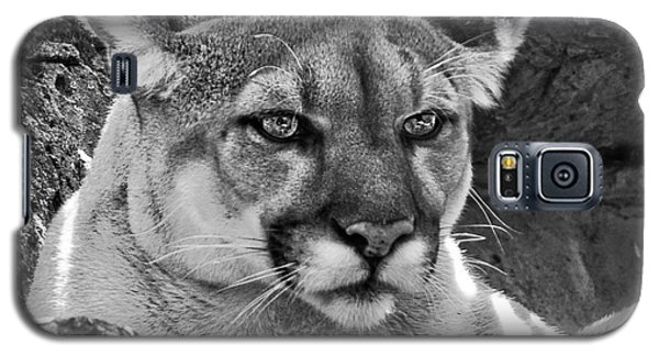Mountain Lion Bergen County Zoo Galaxy S5 Case