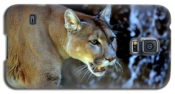 Mountain Lion Galaxy S5 Case by Deena Stoddard