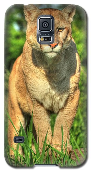 Galaxy S5 Case featuring the photograph Mountain Lion On Watch by Myrna Bradshaw
