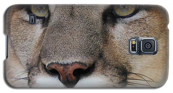 Mountain Lion Portrait 2 Galaxy S5 Case by Diane Alexander