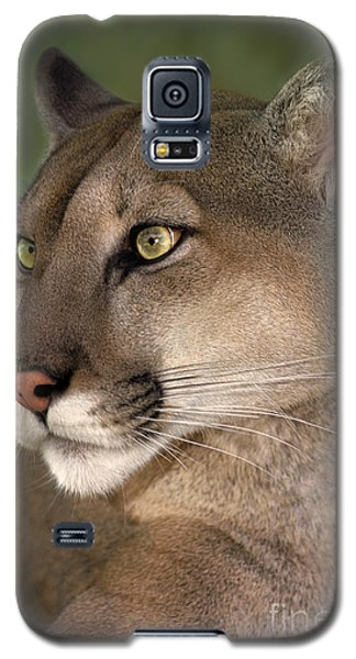 Galaxy S5 Case featuring the photograph Mountain Lion Portrait Wildlife Rescue by Dave Welling