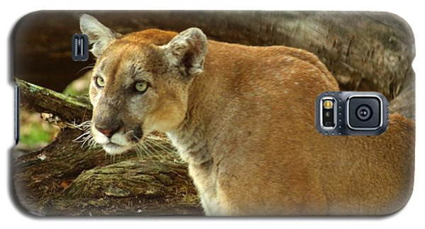Galaxy S5 Case featuring the photograph Mountian Lion by Donald Williams