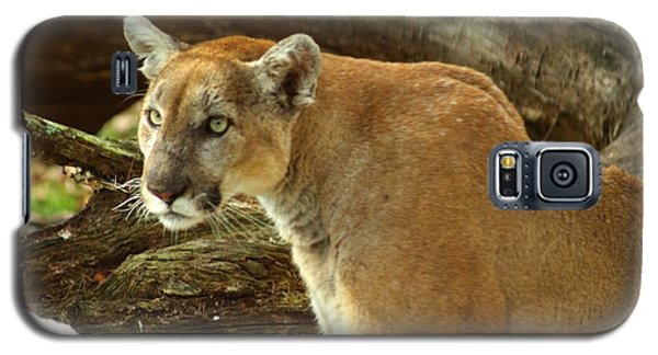 Mountian Lion Galaxy S5 Case by Donald Williams