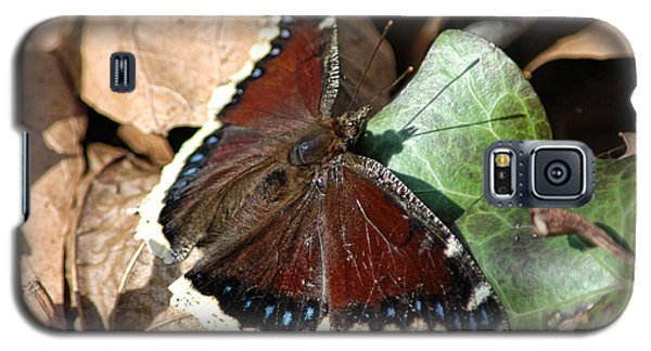 Mourning Cloak Galaxy S5 Case