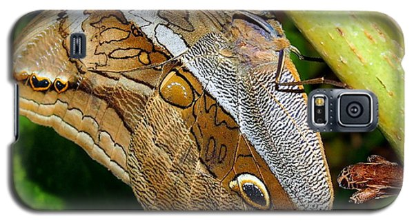 Galaxy S5 Case featuring the photograph Mournful Owl Butterfly by Amy McDaniel