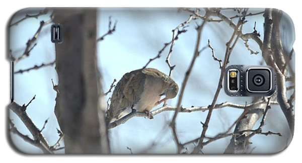 Galaxy S5 Case featuring the photograph Mourning Dove by Dacia Doroff