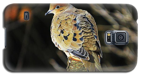 Mourning Dove On Post Galaxy S5 Case