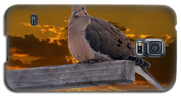 Galaxy S5 Case featuring the photograph Mourning Dove Orange Sky by Marjorie Imbeau