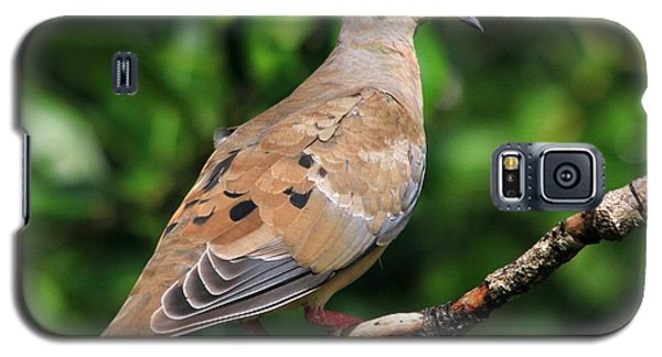 Mourning Dove Posing Galaxy S5 Case
