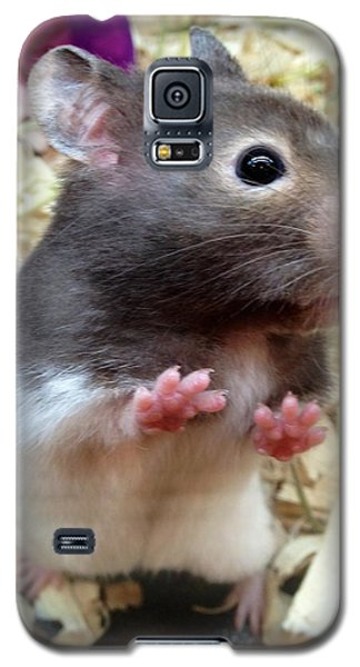 Galaxy S5 Case featuring the photograph Mouse In The House by Carla Carson