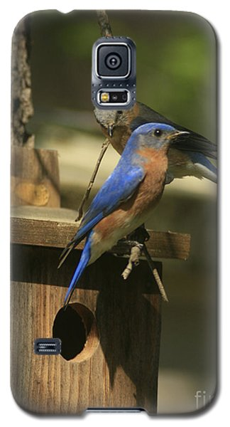 Mr. And Mrs. Bluebird Galaxy S5 Case