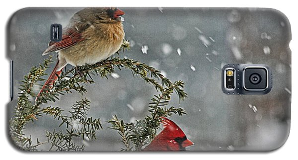 Galaxy S5 Case featuring the photograph Mr. And Mrs. Cardinal by Denise Romano