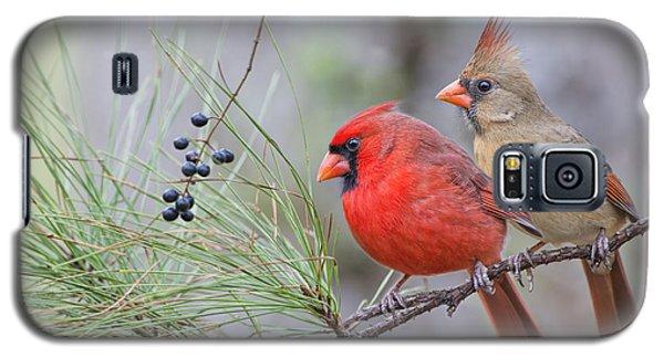 Mr. And Mrs. Redbird In Pine Tree Galaxy S5 Case