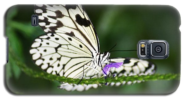 Galaxy S5 Case featuring the photograph Mr. B by Mary Lou Chmura