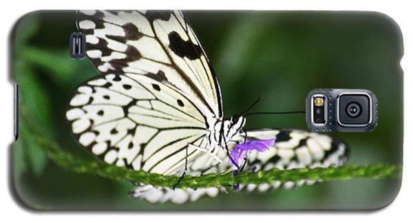 Mr. B Galaxy S5 Case by Mary Lou Chmura