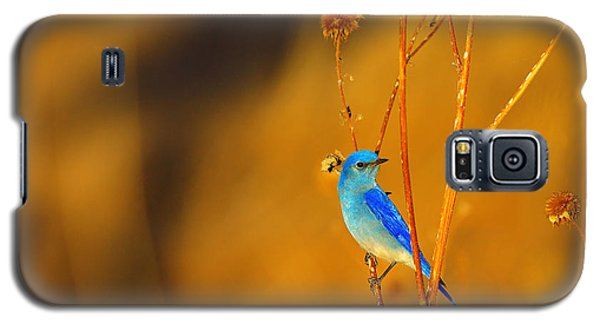 Galaxy S5 Case featuring the photograph Mr. Blue by Kadek Susanto