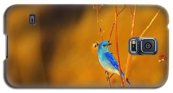 Mr. Blue Galaxy S5 Case