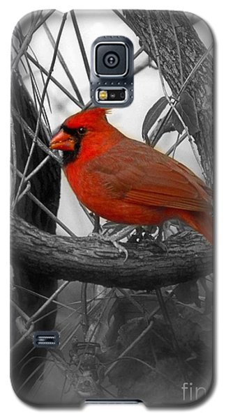 Mr Cardinal -card Galaxy S5 Case