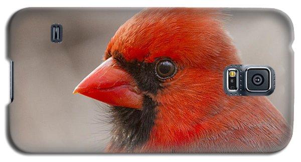 Mr Cardinal Portrait Galaxy S5 Case by Mircea Costina Photography